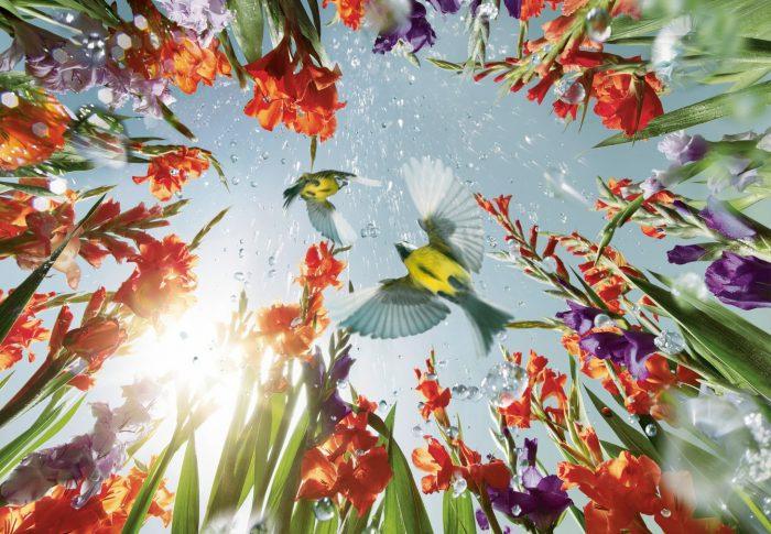 Primăvara începe cu Kärcher – ajutorul secret pentru curățenia desăvârșită
